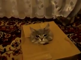 Watch This Cat In A Box Because Cute