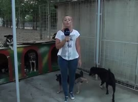 Reporter Gets Peed on 3 Times by Dog - Video