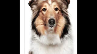 Choose out Newest Service - Philadelphia dog walking service - www.romppetcare.com - Video