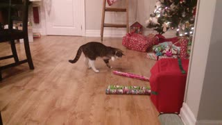 Curious Cat Battles Wrapping Paper