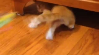 Kitty Play - Video