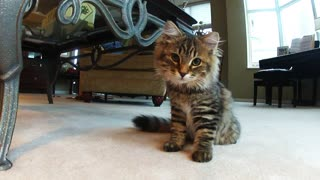 Kitten Discovers GoPro Camera