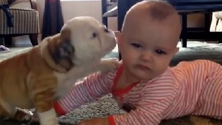 Adorable Bulldog Can't Stop Kissing Baby - Video