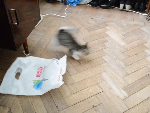 Determined Kitten Attacks Plastic Bag!