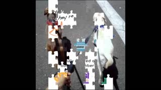 Philadelphia Dog Walking Service - www.romppetcare.com - Video