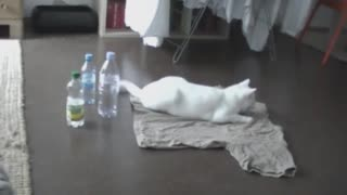 Cat Scares Himself After Knocking Over Bottle - Video