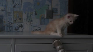 Cute Kitten Takes a Big Fall! - Video