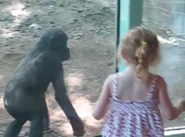 Little Girl and Baby Gorilla Become Instant Friends