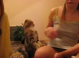 kitty wants to caress - Video