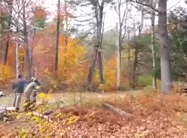 Weapon knocks tree with one shot - Video