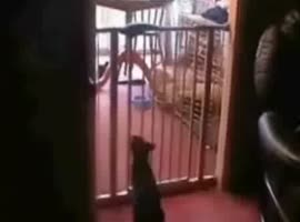 jumping cat2 - Video