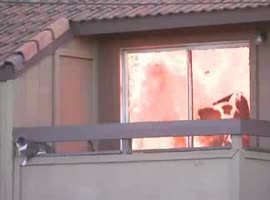 Cat Escapes from House Fire - Video