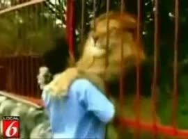 African lion - Video