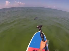 Paddle Boarder Encounters Shark