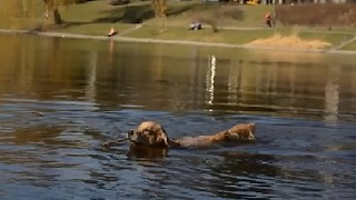 Dog Shows Us How to Celebrate Spring - Video