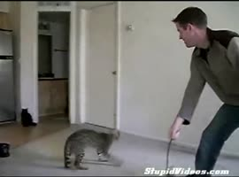 crazy cat jumps on important - Video