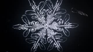 Mesmorizing Timelapse of Snowflakes Forming - Video