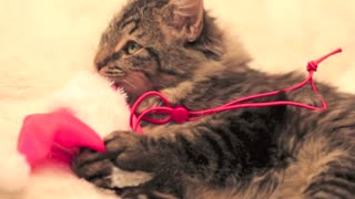 Cute Christmas Kitten - Video