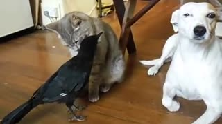 cane gatto e.... - Video