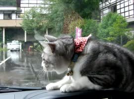 Dashboard Cat vs Windshield Wipers