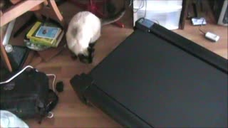 Curious Kittens Test Out Treadmill