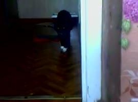 Cat brings toy - Video