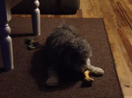 Dog Going Crazy - Video