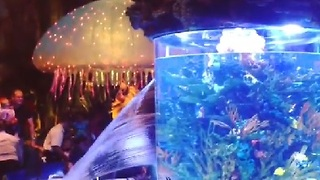 Fish Tank Bursts at Disney Restaurant - Video