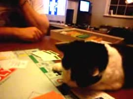 Monopoly and cats - Video