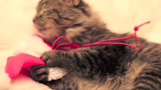 Adorable Cat's First Christmas! - Video