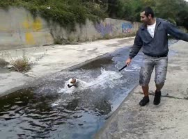 Pit Bull in the river - Video