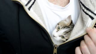 Kitten Wants Alone Time In Owner's Sweater! - Video