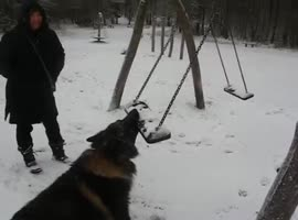 Determined Dog Battles Swing - Video