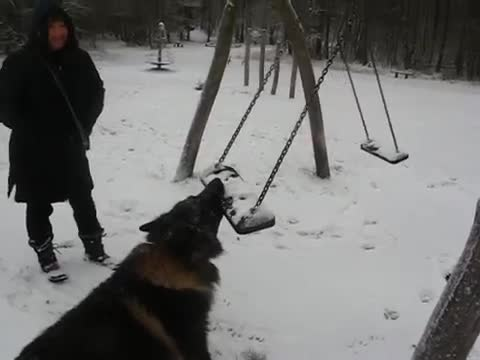Determined Dog Battles Swing
