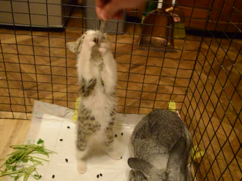 Cute Kitten Hangs Out With Bunny