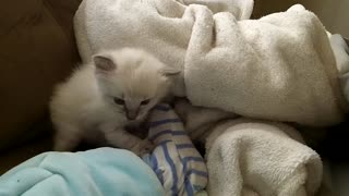Adorable Kitten and Baby Enjoy Playtime - Video