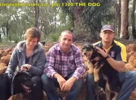 HAART Adoption and our Pet Barrier Dog Fence - Video