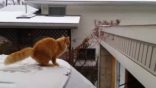 cat jumps FAIL - Video