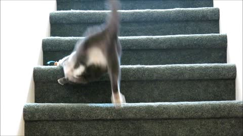 Cat and Mouse, on Stairs