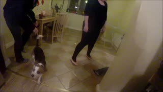 Overly Excited Dog Fail - Video