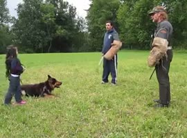5 year old girl is protected by german shepherd