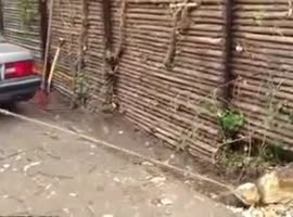Tree Stump Removal Win Fail - Video