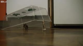 Human stupidity and intelligence Mouse - Video