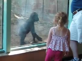 Little Girl Plays with Baby Gorilla