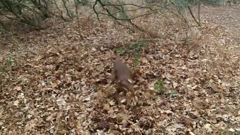 dog walking on a rope