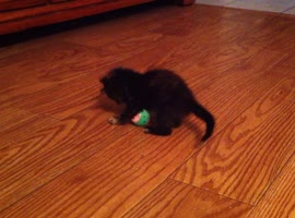 Cute Kitten Learns to Play With Ball