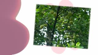 Garcinia Cambogia|natural weight loss - Video