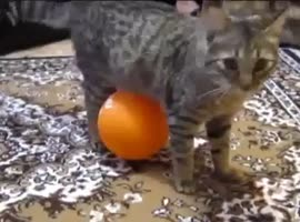 Cat and balloon - electrostatic