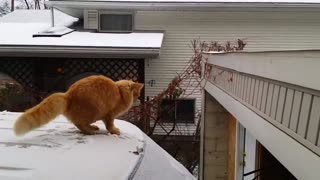 Cat fail jumping off snowy roof of the car! - Video