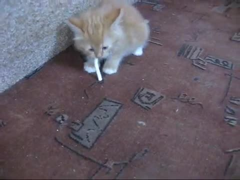 Kitten Refuses To Give Up Cigarettes